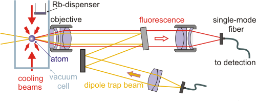 Optical trap setup